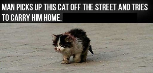 ugly cat story heartbreaking