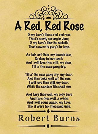 Greatest Cute Love Poems Ever Written Red Rose