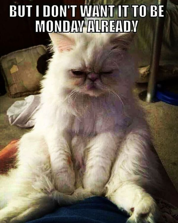 awesome funny monday memes
