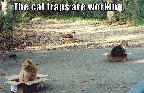 cutest cat memes