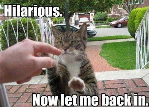 funny kitty pictures