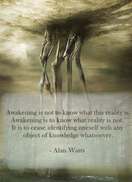 alan watts quotes awakening