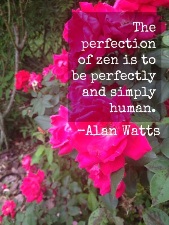 motivational alan watts quotes