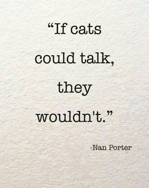 cat sayings