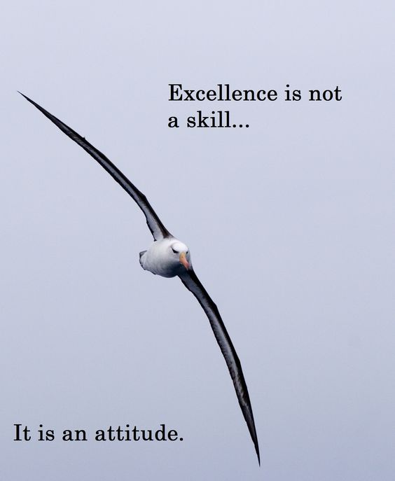 commitment quotes on excellence