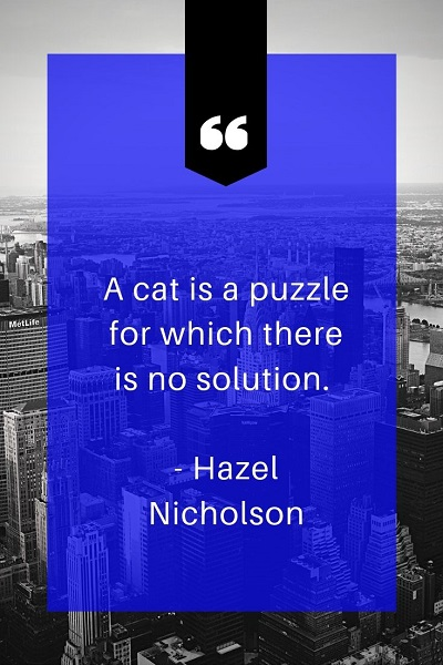 most inspirational quotes about cat