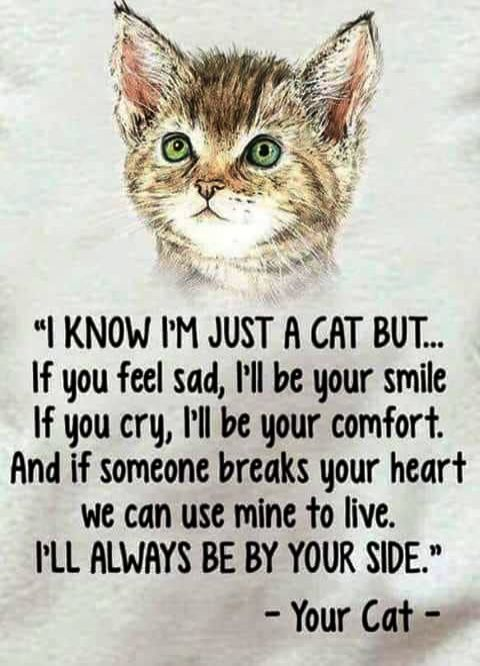 sweet cat quotes