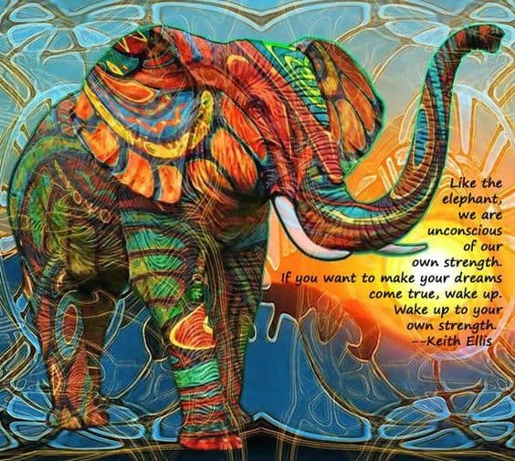 inspirational elephant quotes