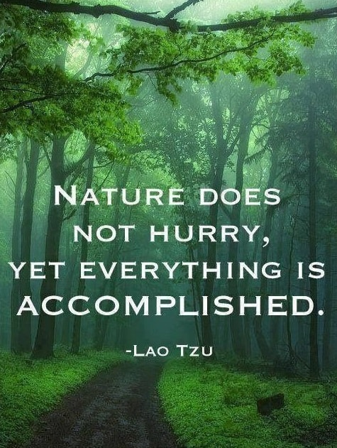 lao tzu quotes on nature
