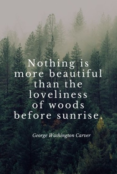 nature quotes pictures
