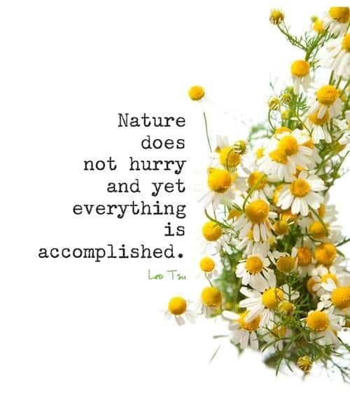 quotes on nature by famous personalities