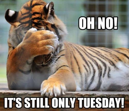 tuesday quotes funny