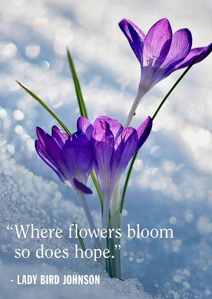 spring quotes and sayings