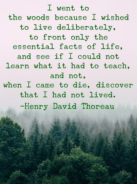 thoreau quotes i went to the woods