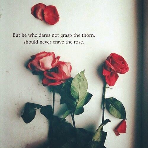 rose lover quotes