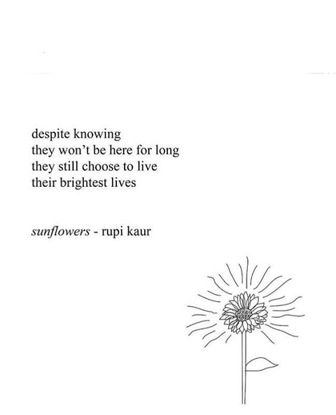 rupi kaur quotes sunflowers