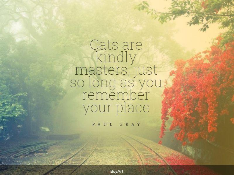 funniest cat quotes