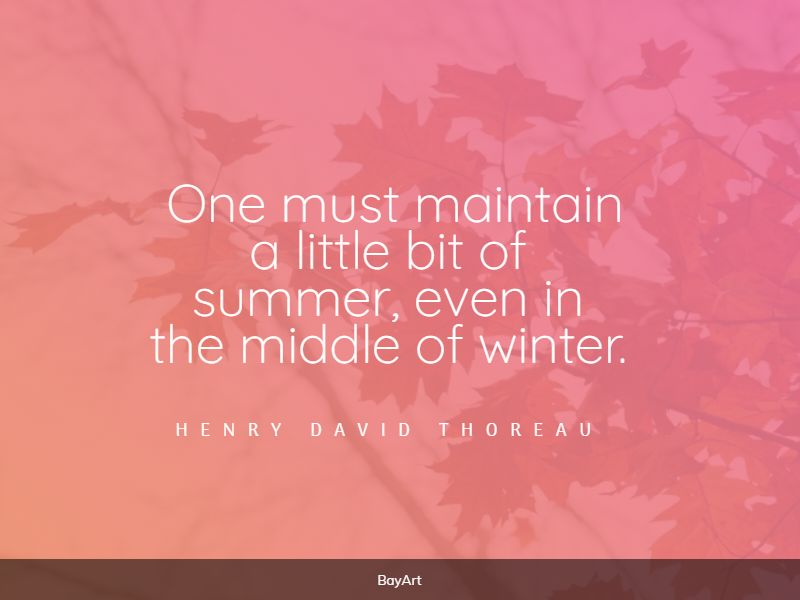 funniest summer quotes