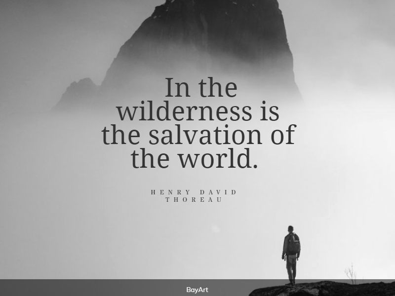 popular wilderness quotes